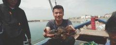 鲜活海刺参和野生海刺参的营养价值