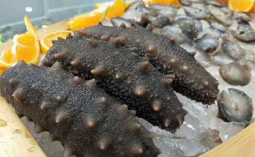 如何对进行海参室内控温养殖